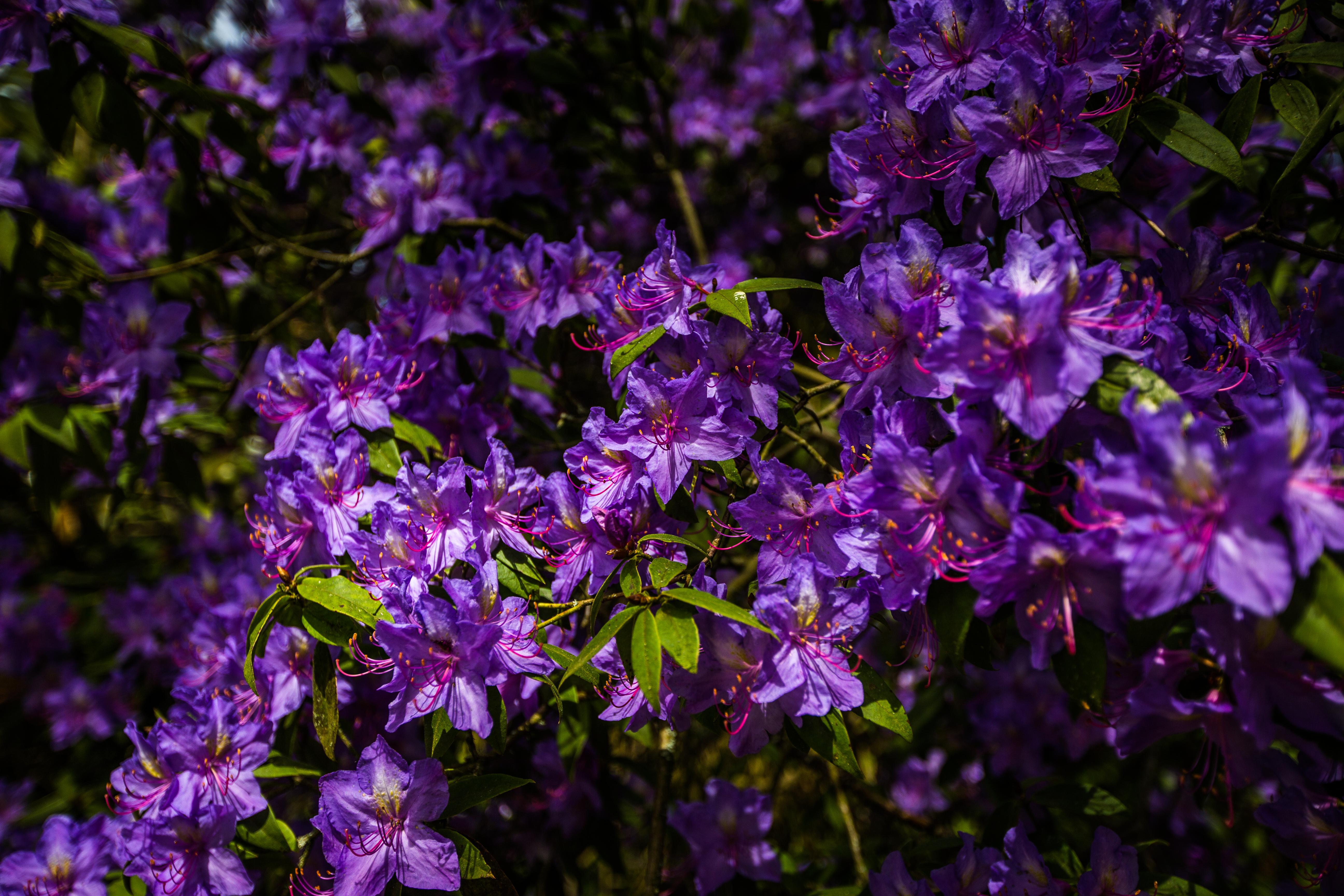 A Cornucopia of Spring Colour